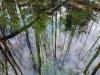 Stervo gamtinis rezervatas © Vilius Kairys