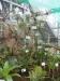 Bromelijiniai augalai
