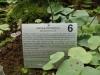 Utricularia genties aprašymas