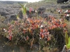 carnivorous-plants-and-their-habitats-60
