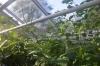 Drugeliai Amsterdamo botanikos sode