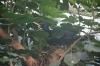 Drugeliai Amsterdamo zoologijos sode