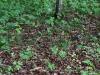 epipactis-purpurata-068