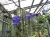 Frankfurto botanikos sodas