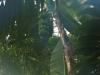 tropiniai01