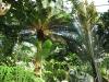 tropiniai04