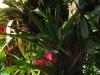 tropiniai09