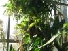 tropiniai11