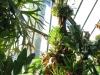 tropiniai14