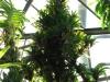 tropiniai15