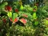 singapuro-botanikos-sodas-00