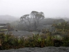 stewartmcpherson-lost-worlds-of-the-guiana-highlands-10