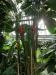 Metai Mainz botanikos sode