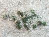 carnivorous-plants-and-their-habitats-philcoxia-06