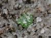 carnivorous-plants-and-their-habitats-philcoxia-08
