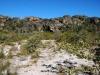 carnivorous-plants-and-their-habitats-philcoxia-19