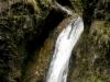 pinguicula-alpina-01-slovakija