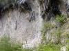 pinguicula-alpina-08-italija
