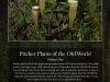 stewartmcpherson-pitcher-plants-of-the-old-world-00-3