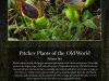 stewartmcpherson-pitcher-plants-of-the-old-world-00-4