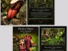 stewartmcpherson-pitcher-plants-of-the-old-world-00