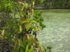 stewartmcpherson-pitcher-plants-of-the-old-world-17
