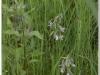 silenu-orchideju-pelke-2017-016