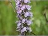 silenu-orchideju-pelke-2017-020