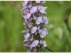 silenu-orchideju-pelke-2017-021