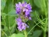 silenu-orchideju-pelke-2017-025
