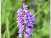 silenu-orchideju-pelke-2017-027