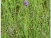 silenu-orchideju-pelke-2017-036
