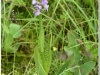 silenu-orchideju-pelke-2017-037
