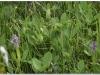 silenu-orchideju-pelke-2017-038