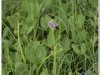 silenu-orchideju-pelke-2017-040