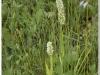 silenu-orchideju-pelke-2017-049