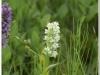 silenu-orchideju-pelke-2017-051