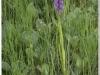 silenu-orchideju-pelke-2017-083