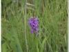 silenu-orchideju-pelke-2017-089