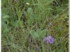 silenu-orchideju-pelke-2017-091