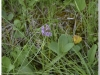 silenu-orchideju-pelke-2017-092