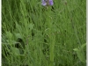 silenu-orchideju-pelke-2017-097