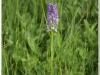 silenu-orchideju-pelke-2017-113