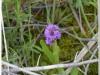 silenu-orchideju-pelke-2017-122