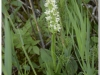silenu-orchideju-pelke-2017-123