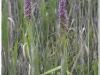 silenu-orchideju-pelke-2017-126
