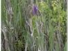 silenu-orchideju-pelke-2017-137