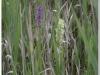 silenu-orchideju-pelke-2017-138
