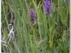 silenu-orchideju-pelke-2017-142