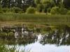 utricularia-australis-032